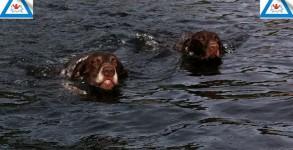 Hund i vann